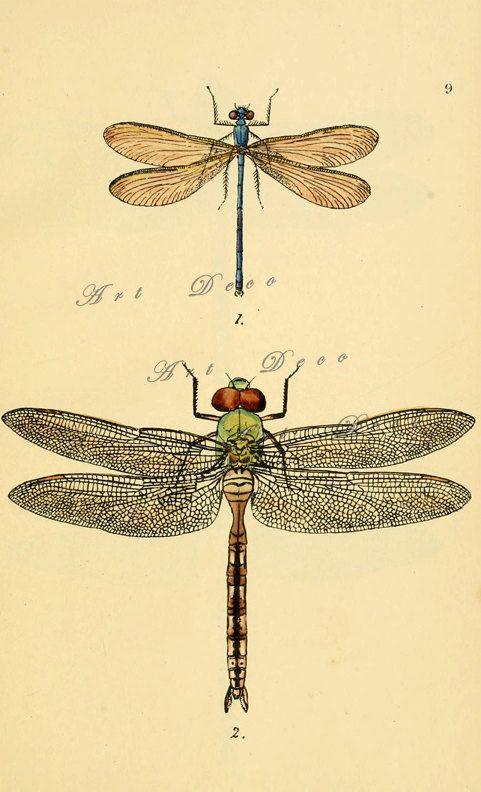 Vintage dragonfly art print, printable digital download no. 1405 ...