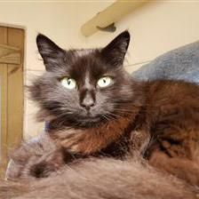 11/7/16 Wesley - Cat Rehoming & Adoption - Wood Green Animals Charity
