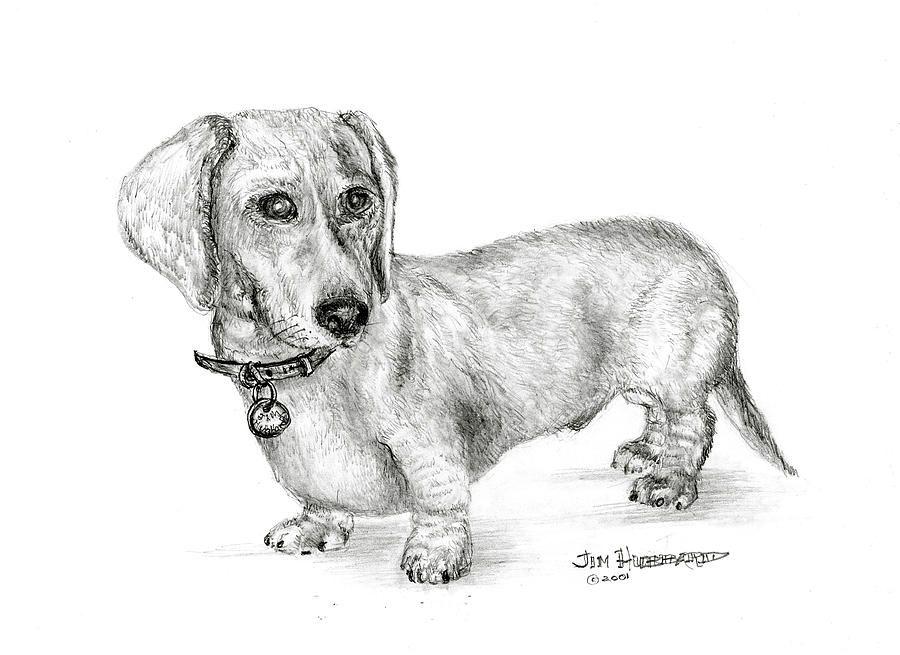 Dachshund Drawing By Jim Hubbard Jamnik Pinterest