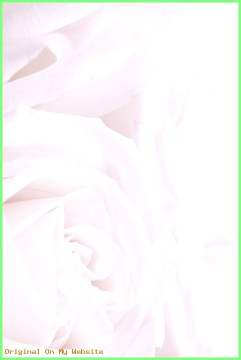 Wallpaper Iphone Flores – White roses phone iphone wallpaper background lock screen