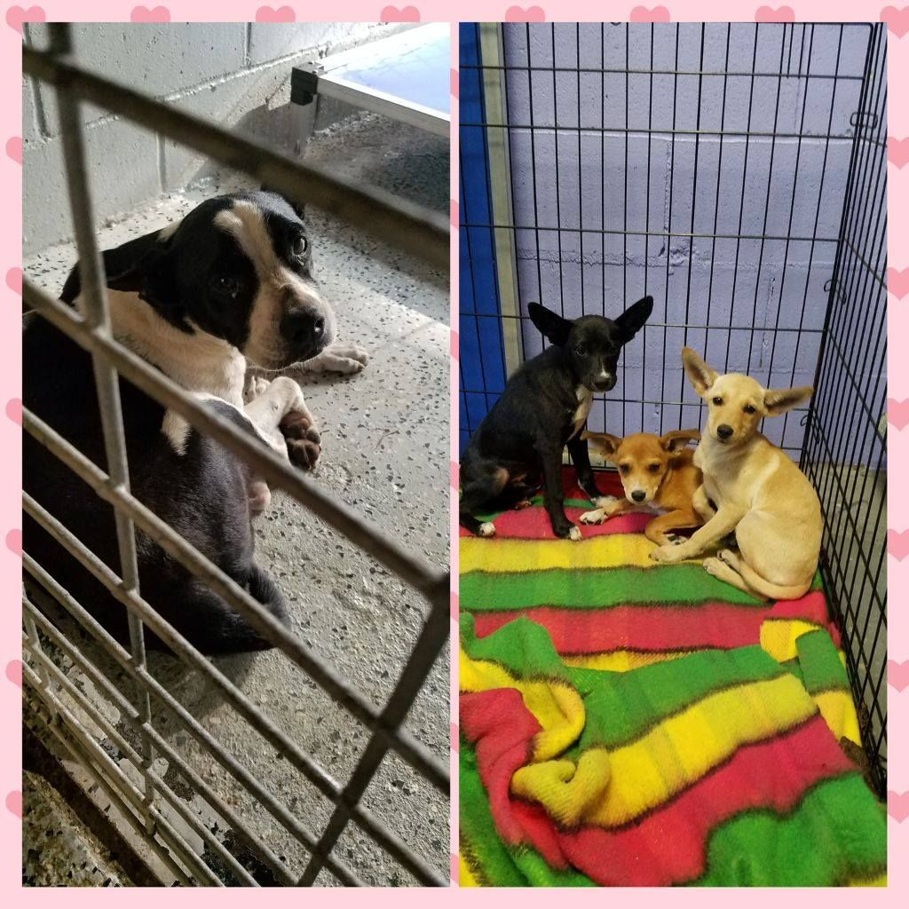 Please Pray For These Including Mother Dog Whom Is Hopelessly Selfless In Waiting For Rescue Adopter For Her Pups Please Sh Dog Adoption Cat Rescue Animals