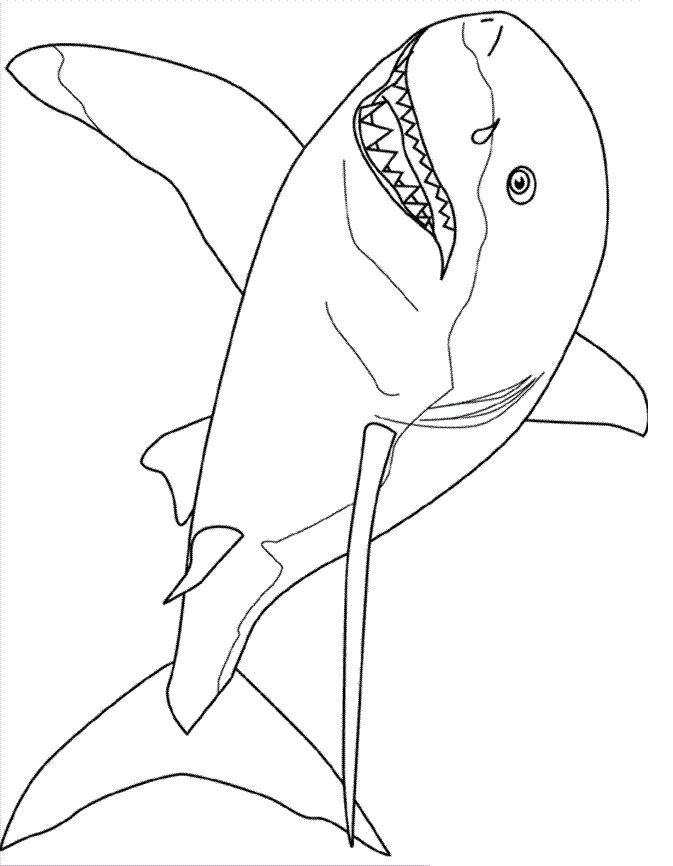 pdf Free Printable Shark Coloring Pages For Kids printable