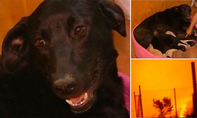 Dog Saves Her Litter Of Nine Puppies From Forest Fire By Digging