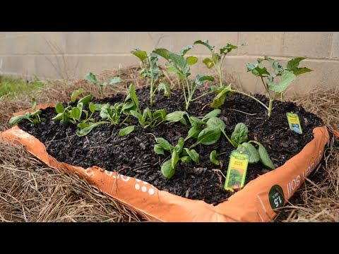 How To Plant A Quick And Easy Garden In Bags Of Soil 400 x 300