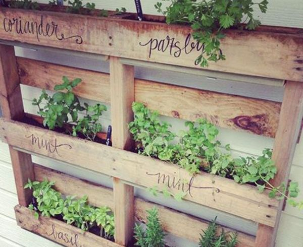 Ways To Display Herb Garden On Wall | DIY Design: Wall Mounted Herb Garden|
