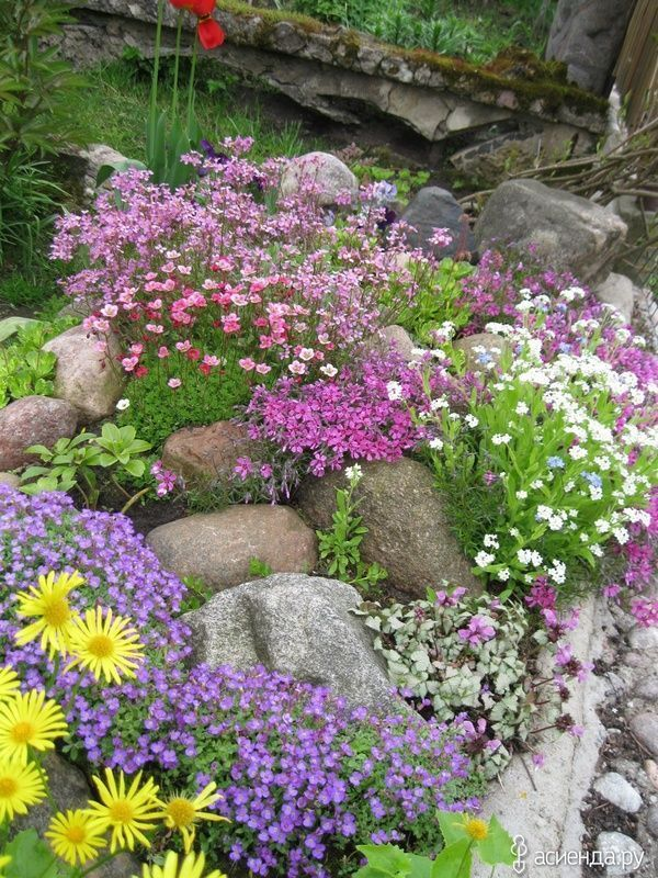 Photo of Design options rock garden with saxifrage #rockgardenlandscaping Design options …