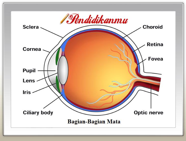 9 Bagian Bagian Mikroskop Dan Fungsinya Kesehatan Mata Tanda