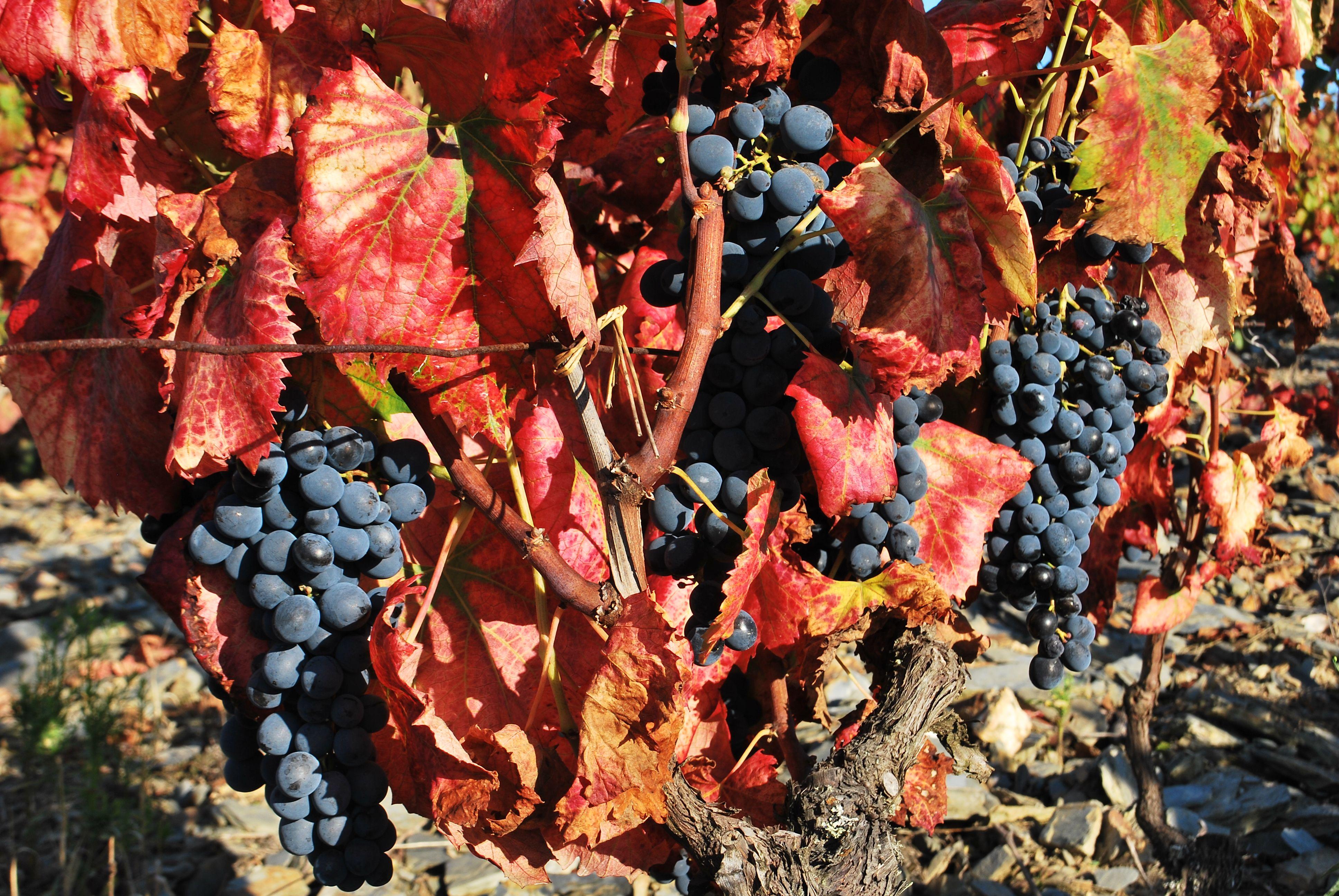 Porto Ribeira Douro Portugal Braga Lisboa Pilgrim Albergue Coimbra Wine Fado Gaia Douro Portugal Ribe