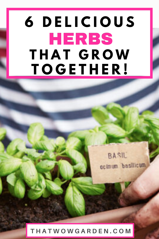0b3c9b87b514b854b4824346425d2bd0 - Expert Gardener Plant Food How To Use