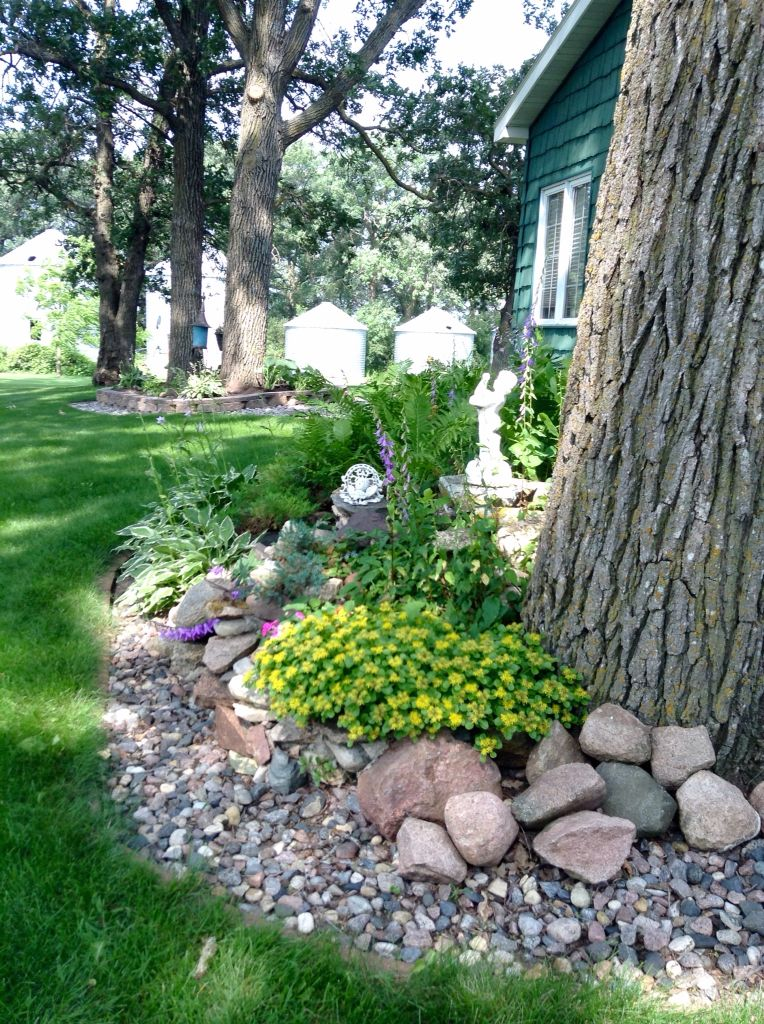 Carol S Garden: Part Of The Farm Rock Garden With Blooming Edam In Yellow