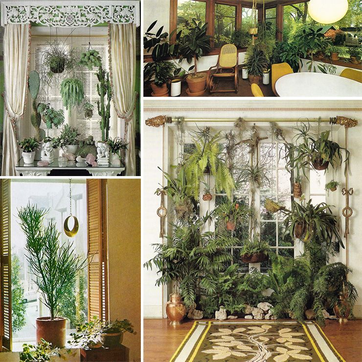 Nyc Christmas Tree Delivery: Monday Musing: Houseplants Are Timeless