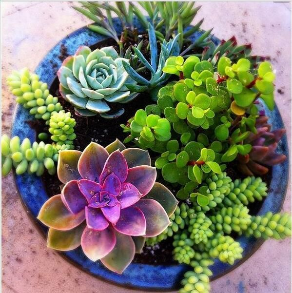 100piece Mini Cactus Plant Mixed Succulent Flower Seeds of Garden Flowers Rare Sempervivum Chickens and Chicks The market in cactus house plants is booming and with very...