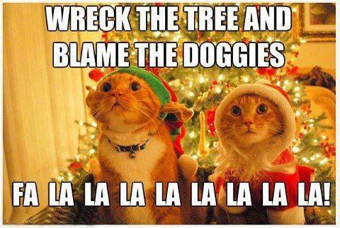 Funny Christmas Kitties D
