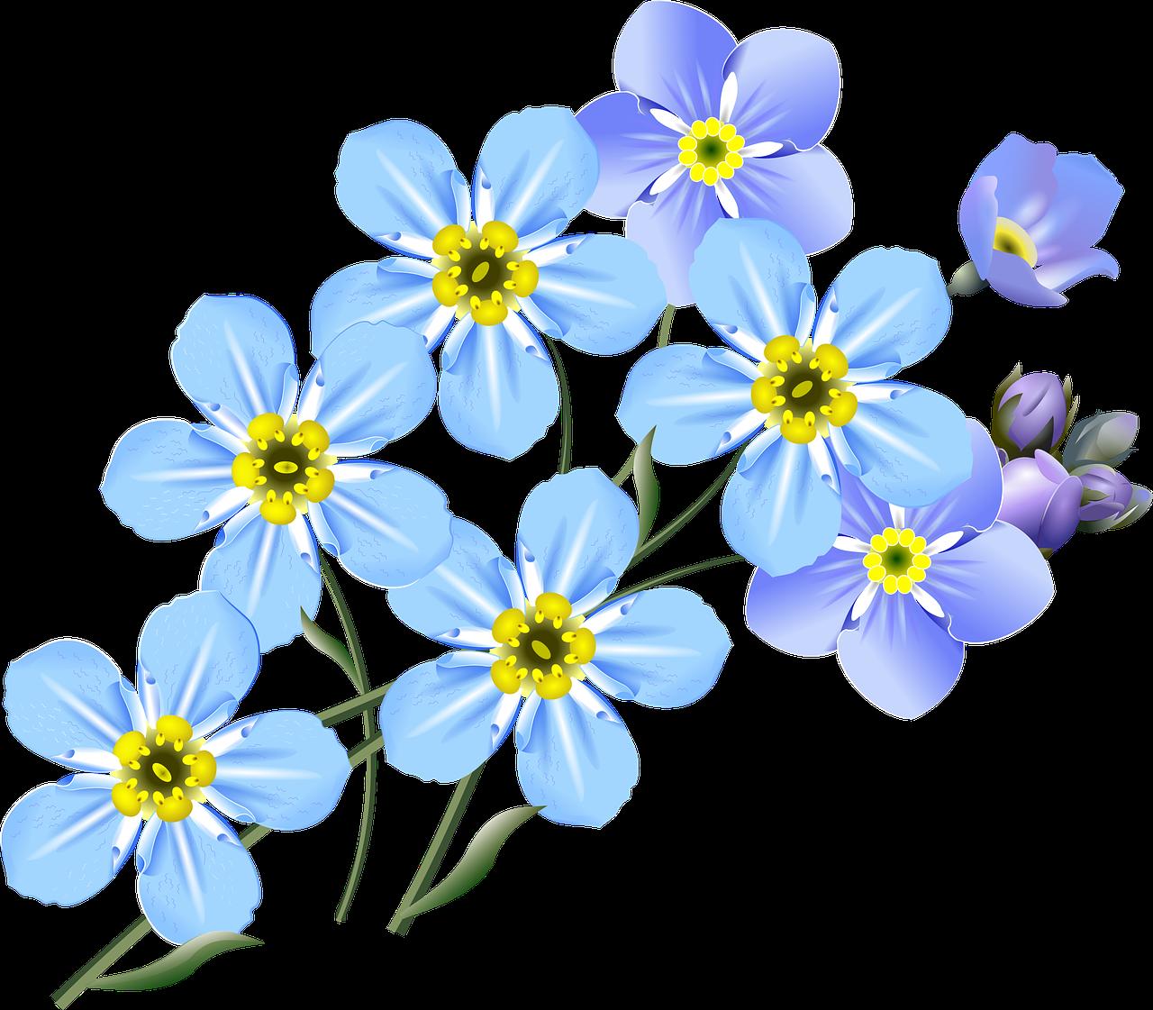 Gratis Obraz Na Pixabay Rysunek Pomnenky Niebieski Kwiat Flower Drawing Realistic Flower Drawing Easy Drawings