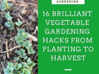 16 haricots de jardinage de légumes brillants de la plantation à la récolte