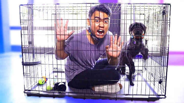 Escape The Dog Cage Challenge Dog Cages Trending Videos Guava