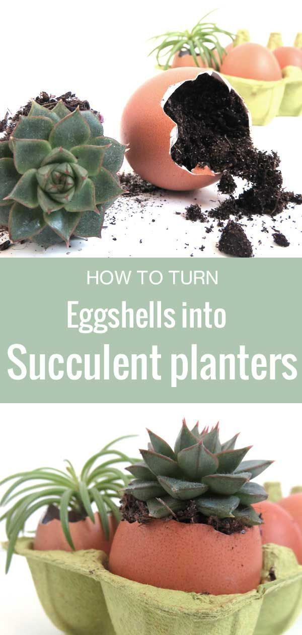 4 Ways to use Eggshells for your Plants | Succulents ...