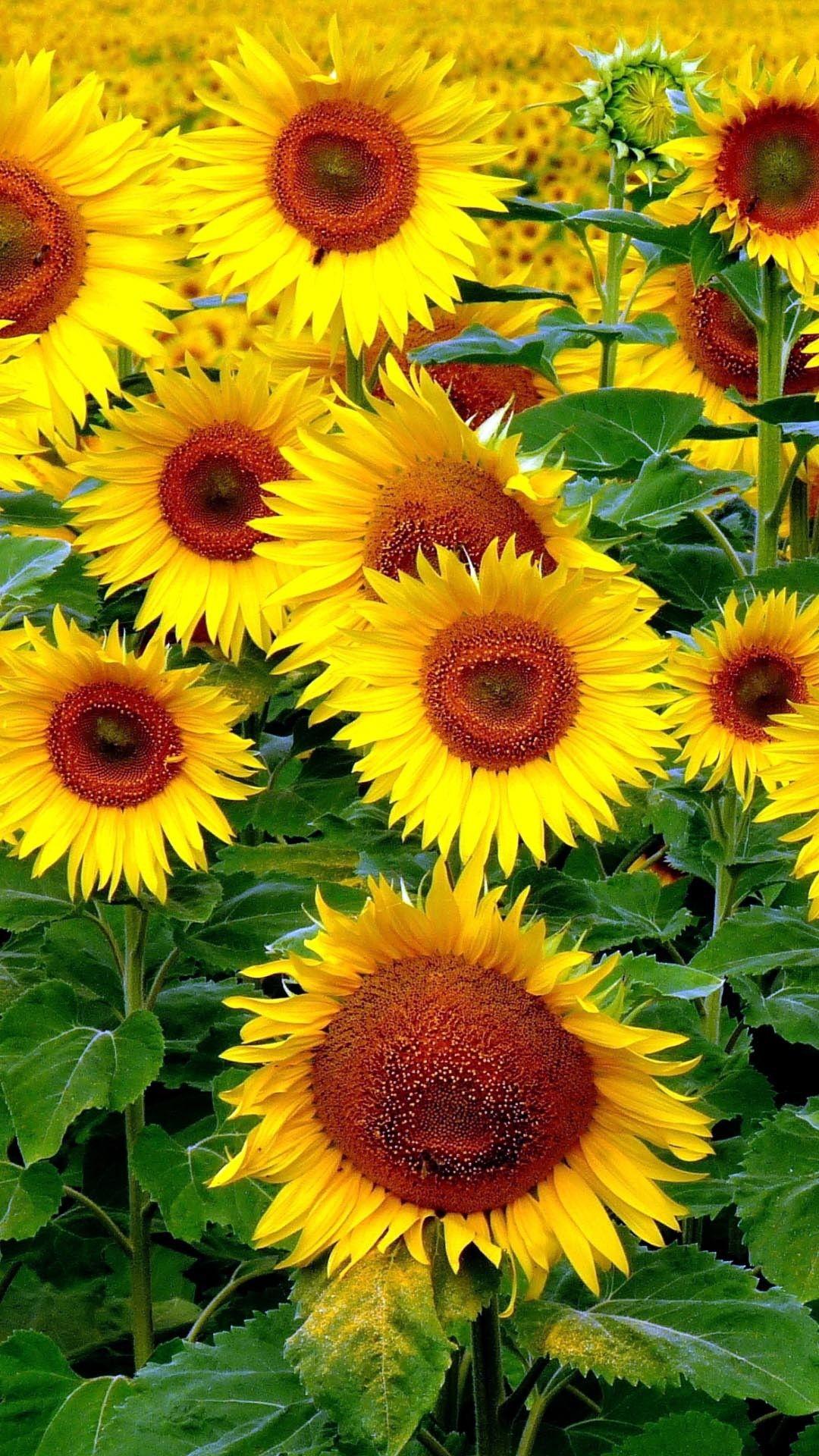 Pin di Dana Batir su fiori ⚘ Fiori, Buongiorno