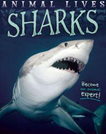 Little Fins Book Club Shark Shark Books Animals