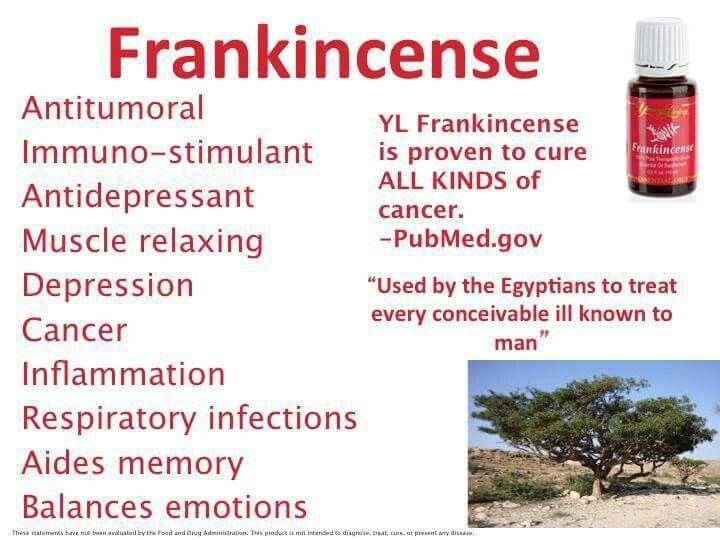 Frankincense IV