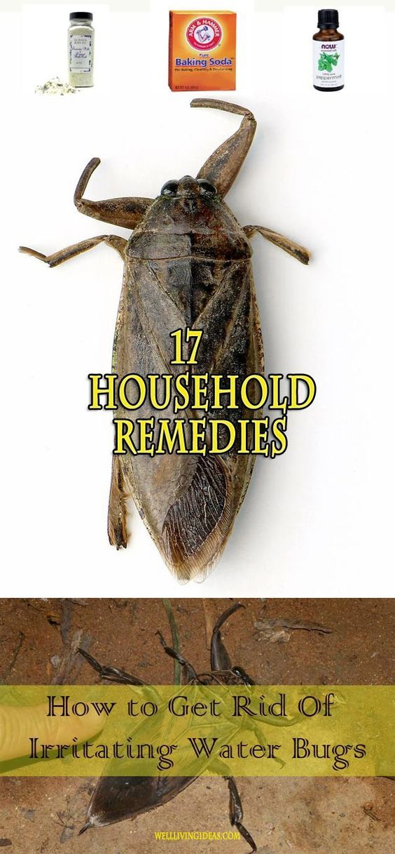 17 Effective Household Remedies To Get Rid Of Irritating Water Bugs Remedies Pest Control Household Remedies
