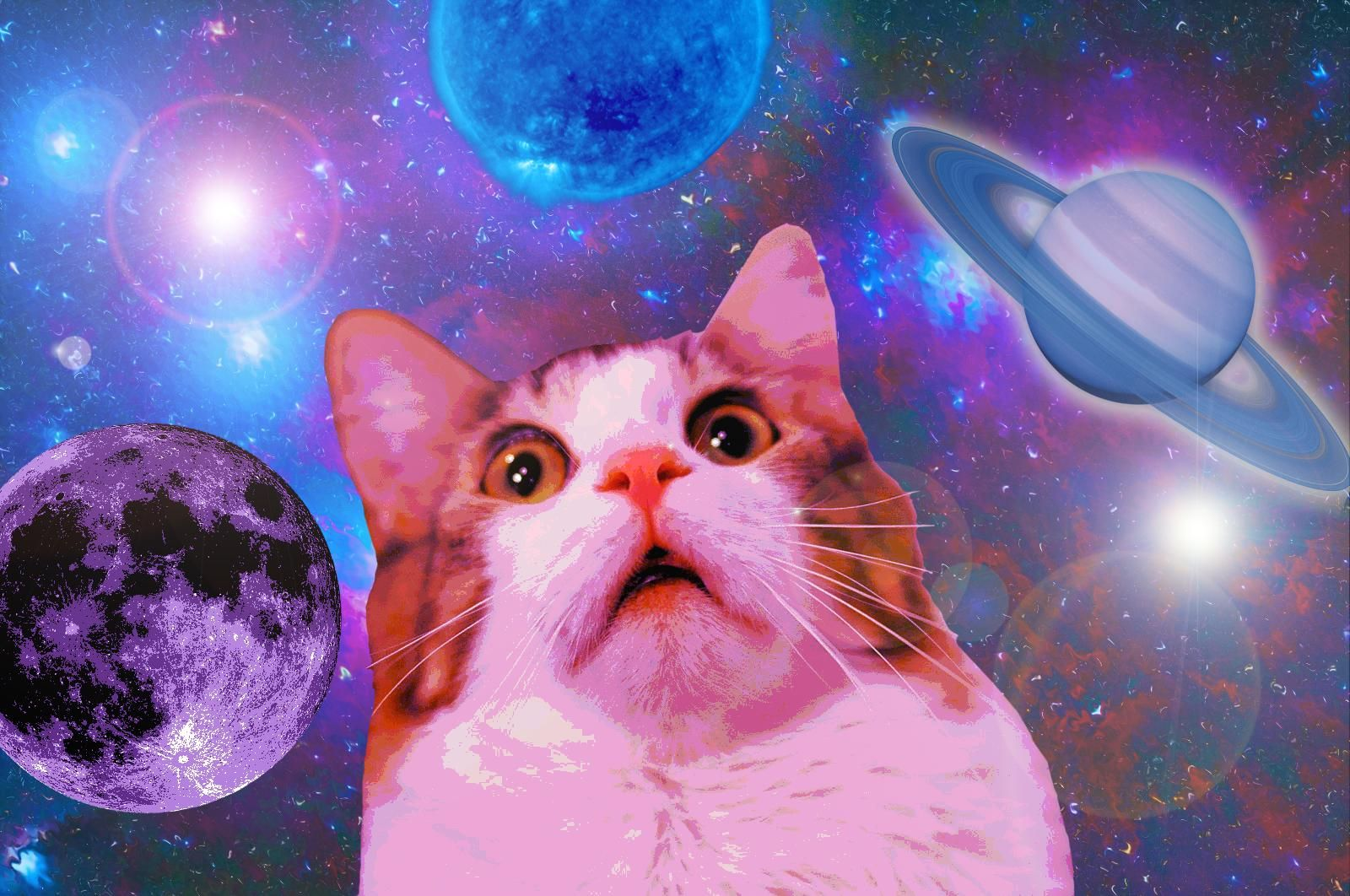 Funny Space Cat Wallpaper 1600x1062 ID51294 in 2020