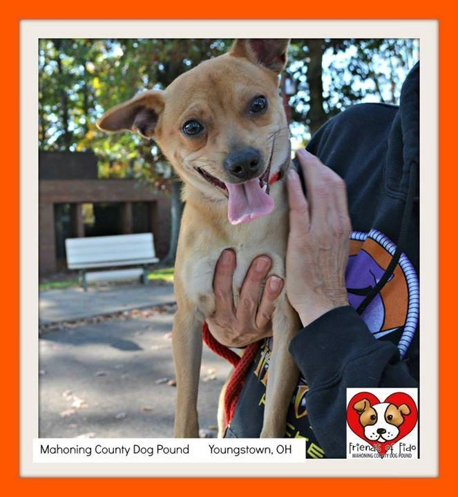 Adopt 945 Loco 10 Adopted On Dog Pounds Chihuahua Mix