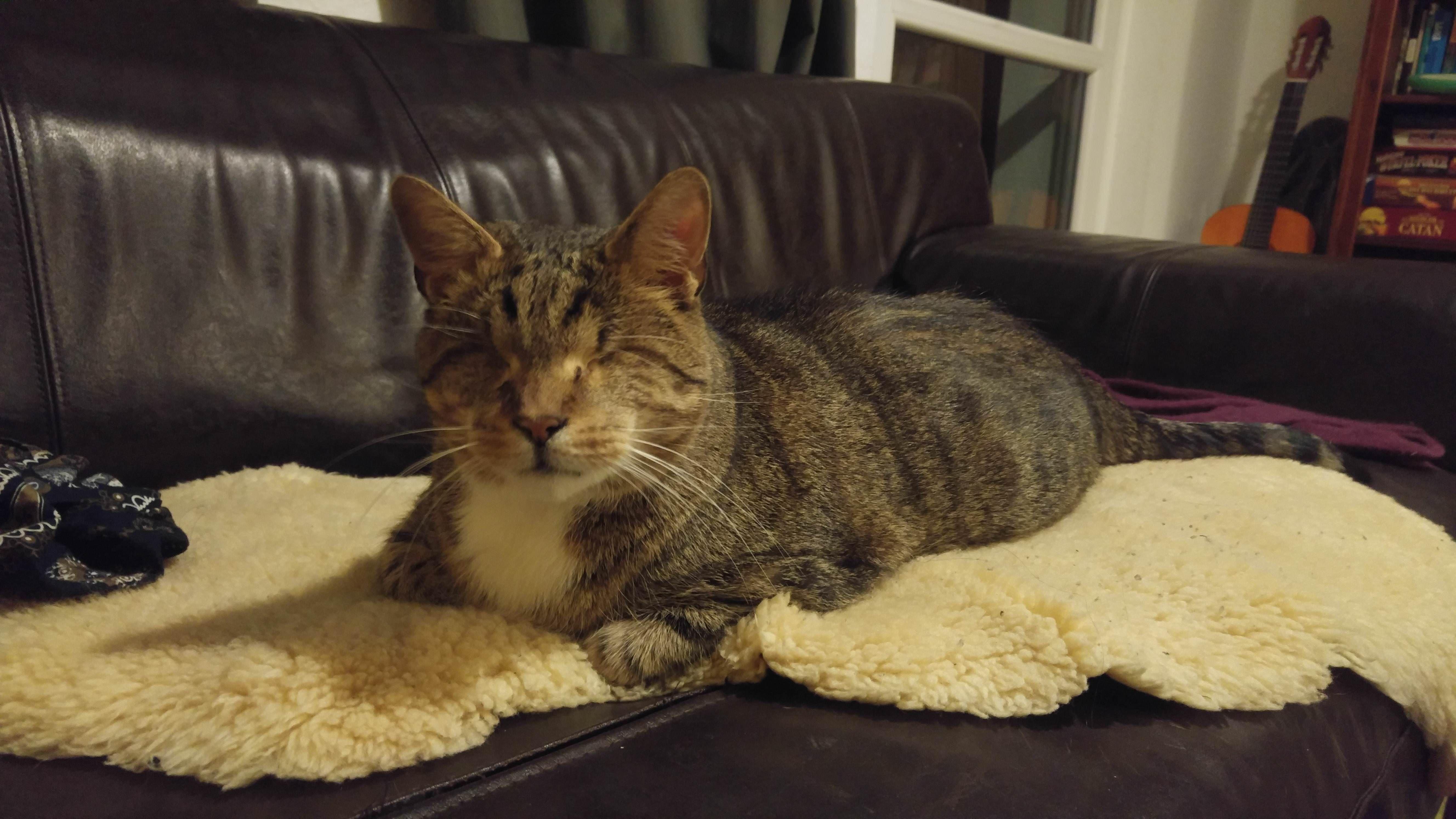 Meet Günther the blind cat of a friend of mine Cat