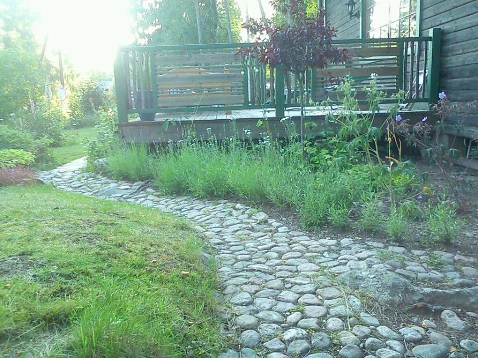 Cobblestonepath to the friggebod, lavender and plum tree
