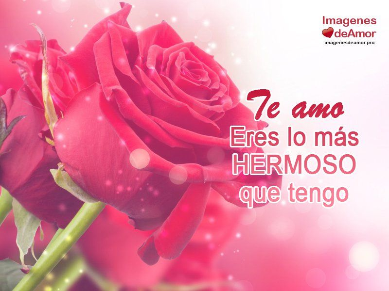 Rosas Corazones De Amor Bellas Por El Dia Del San Valentin