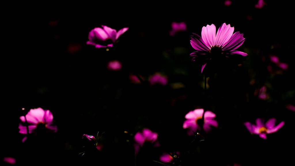 Cosmos cosmo - D3s & Planar T* f1.4 50mm | by TORO*