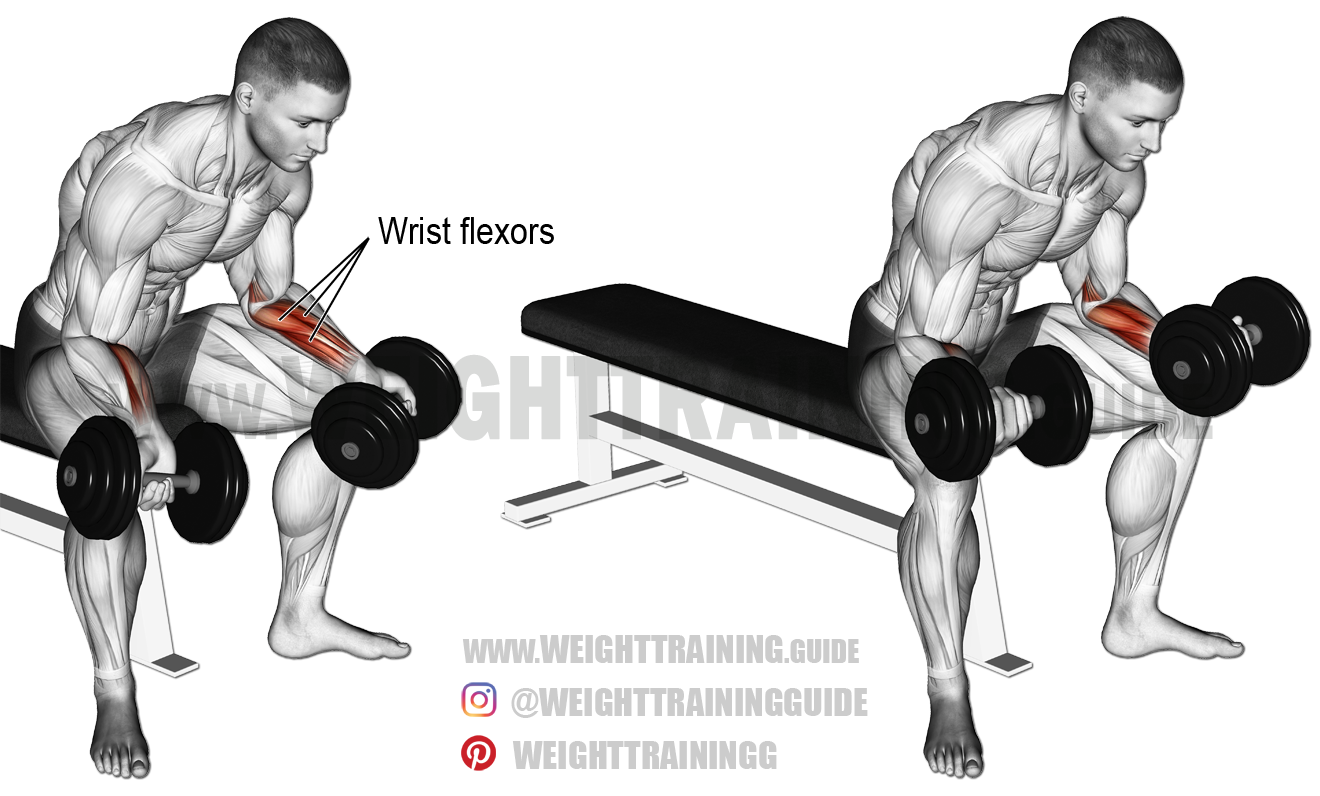 Seated dumbbell wrist curl | Arm Exercises | Forearm ...