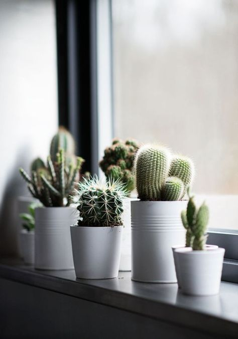 Fensterbank dekoration kakteen pflanzen zimmerpflanzen for Dekoration in wohnung