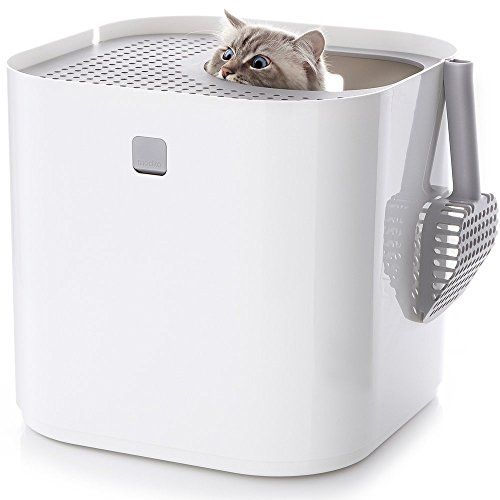 small apartment cat litter box, where to keep a litter box in a ...