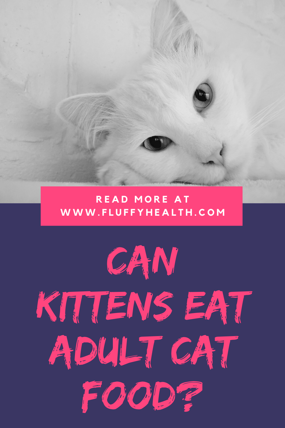 When Can Kittens Eat Adult Cat Food In 2020