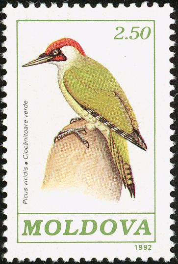 European Green Woodpecker stamps - mainly images - gallery format