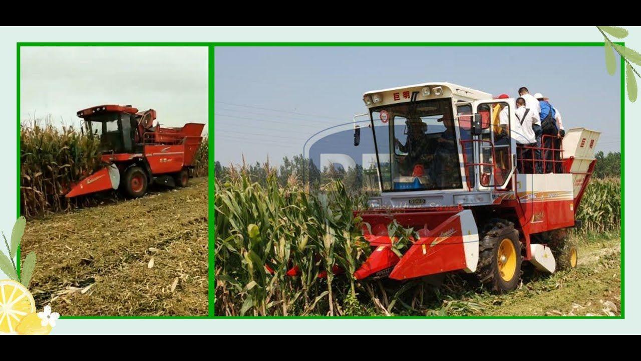 الصين حار بيع حصادة الذرة حصادة الذرة آلة منتقي الذرة في العراق Corn Maize Maize Corn