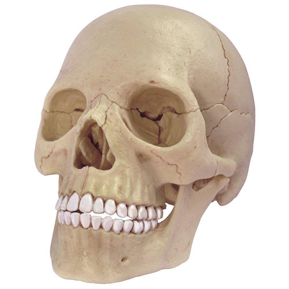 Skull Puzzle Escape Room Prop