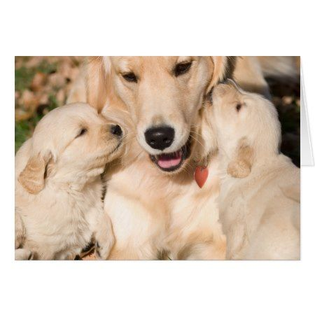 Golden Retriever Happy Mother S Day Card Zazzle Com In 2020 Retriever Puppy Beautiful Dogs Golden Retriever