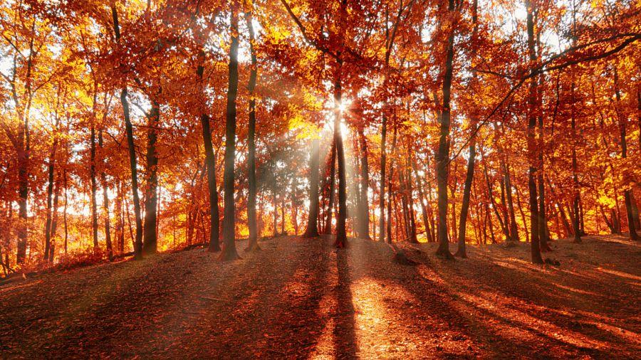 Warm morning light by Ingmar Hoogerhoud (Netherlands) xxx