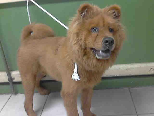 Www Petharbor Com Pet Laco1 A4975596 Pets Animals Best Dogs