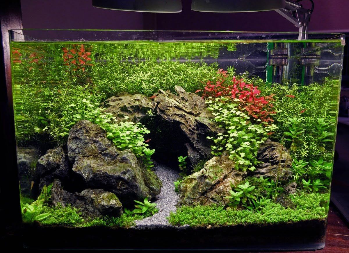 Freshwater fish tank youtube - 15 Gal Planted Tank The Cave Youtube