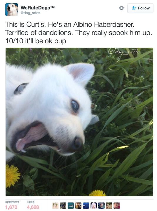 Curtis. 10/10 bravery | Admit It, This Funny AF Twitter Account Is What We All Do To Dogs IRL