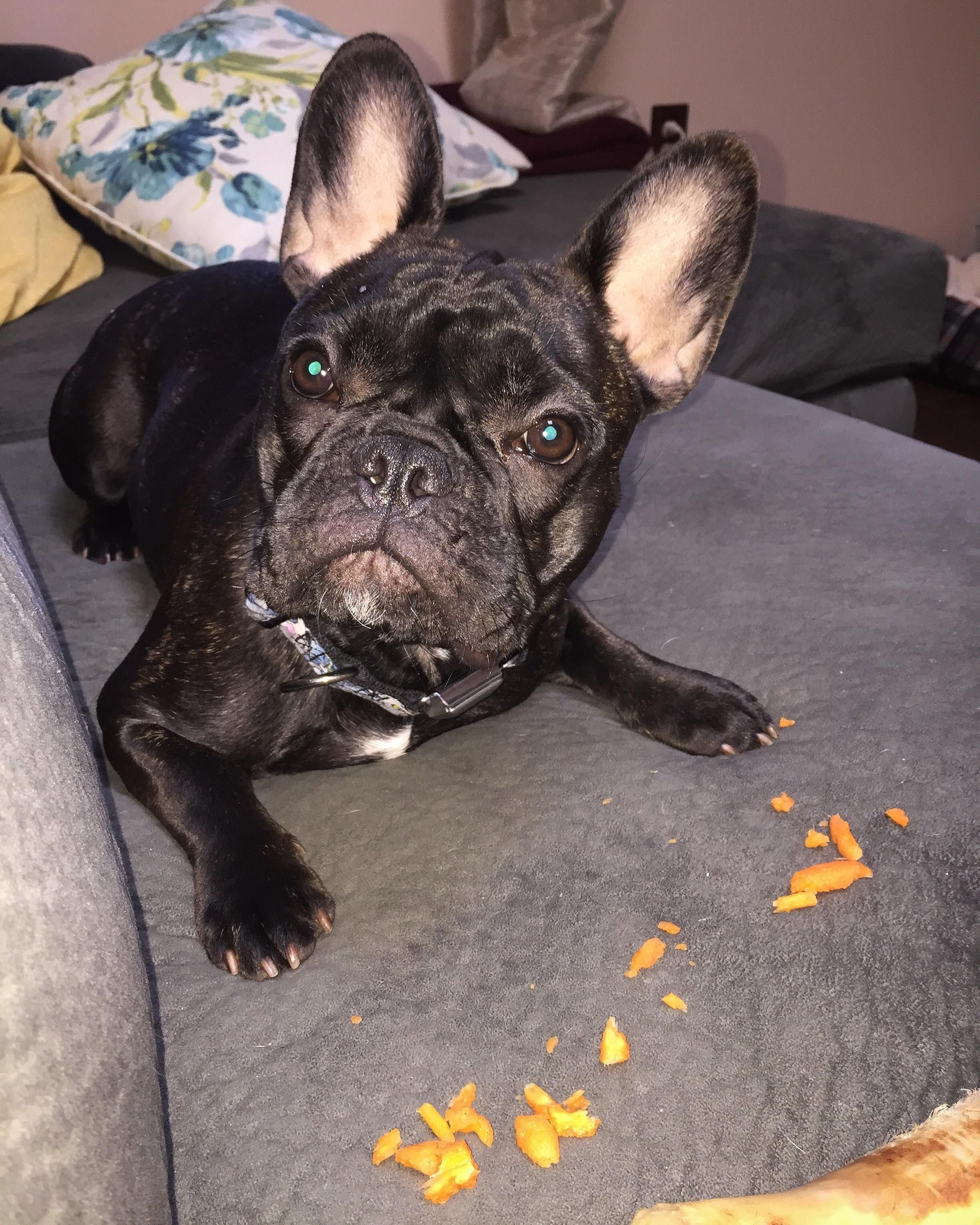 So Carrots Was A Fail Of The Epic Variety Chewed Up And Left As