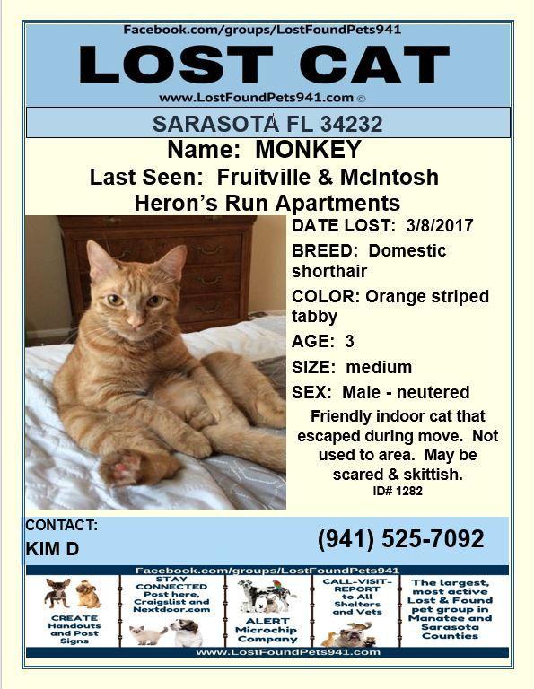 Lost Cat Female 13 Y O Grey Colchester Last Seen 7 10 Female