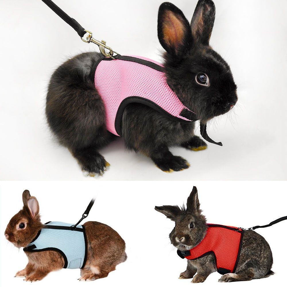 Adjustable Pet Harness Leash Rabbit Squirrel Lead Collar Mesh Vest for Small Pet  | eBay