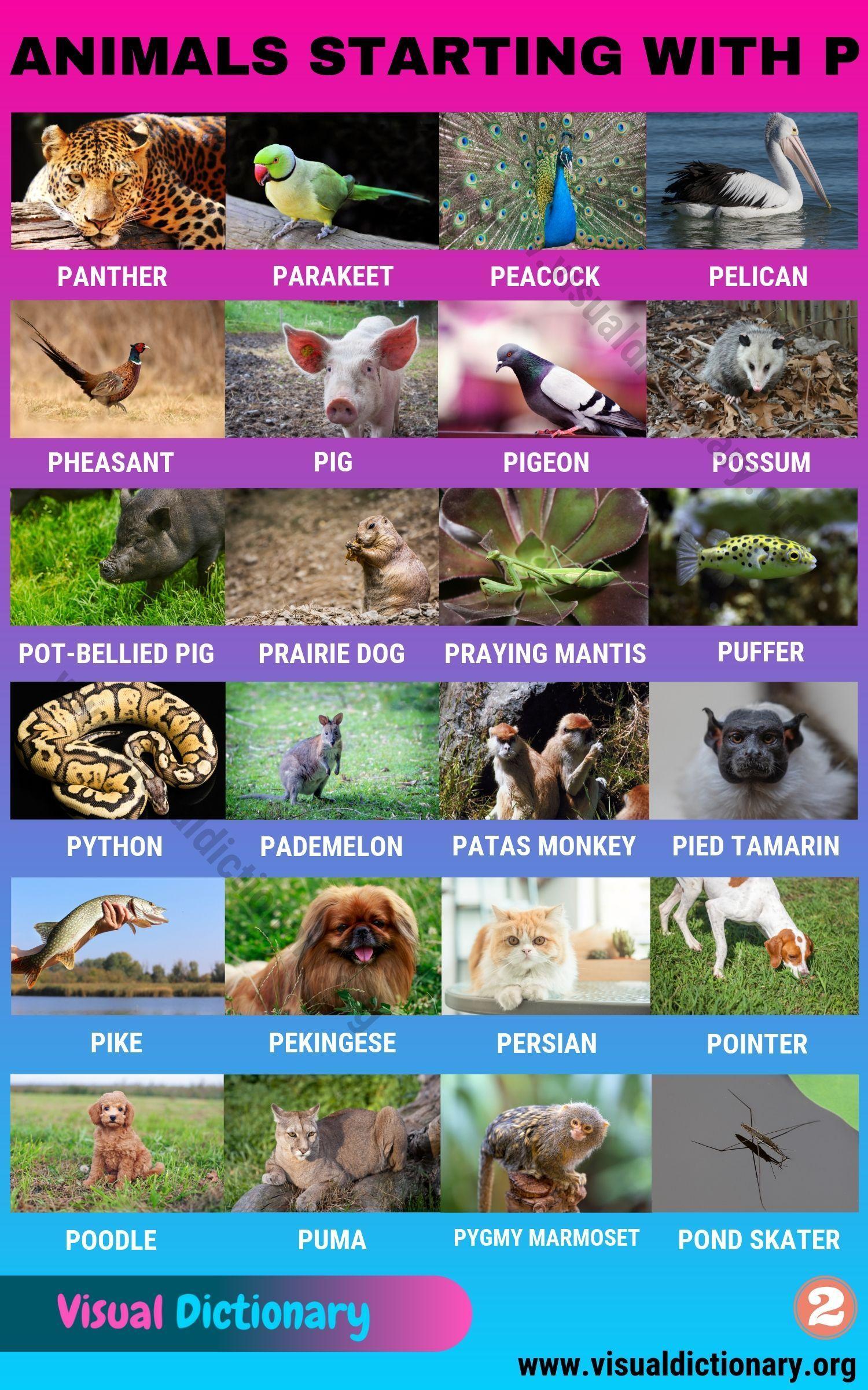 Animals That Start With P List Of 70 Amazing Animals