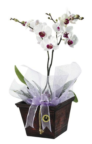 Orchids Orchids Flowers