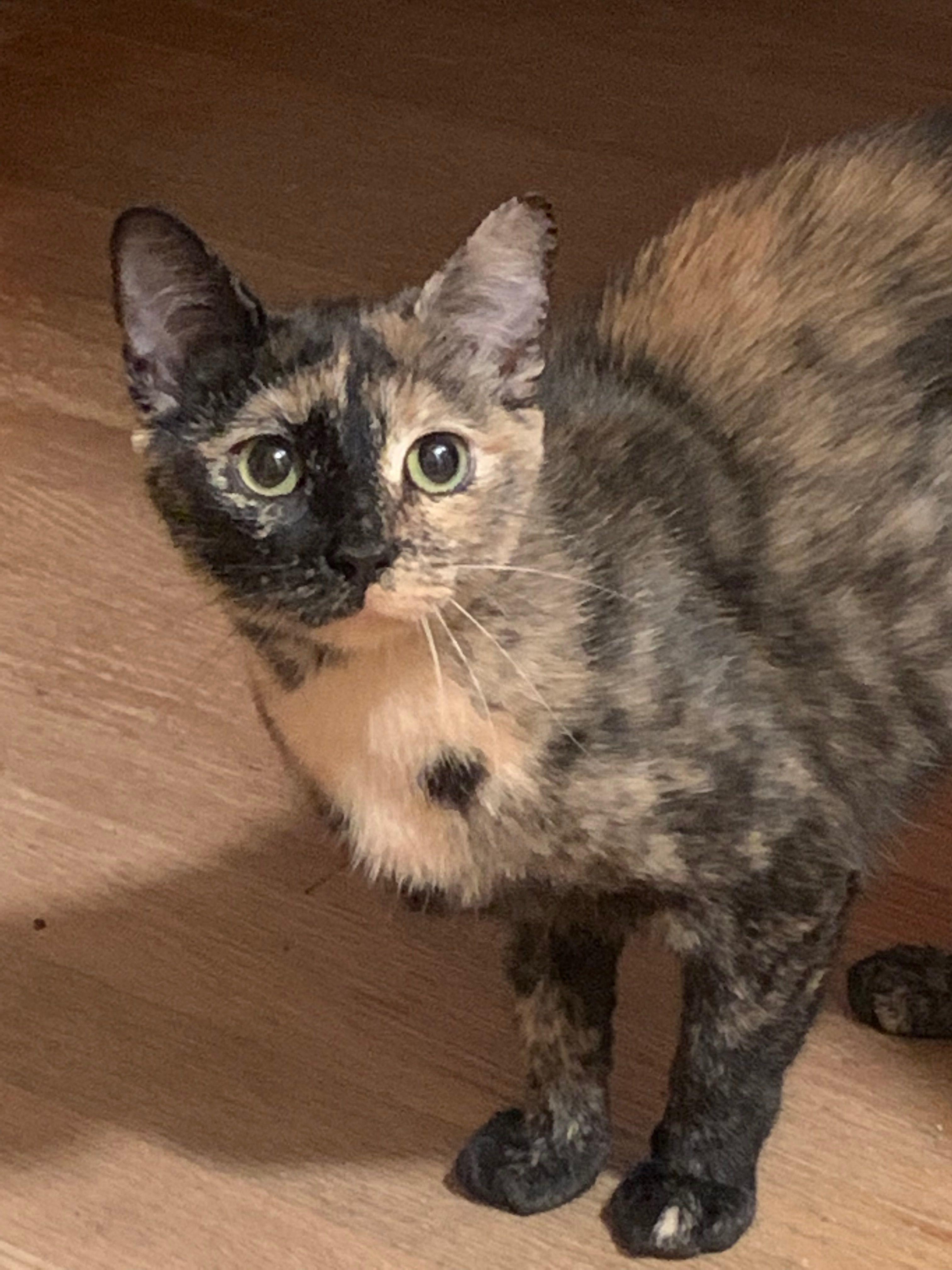 Adopt Nona (Foster Salem, NH) on Pet adoption, Animal