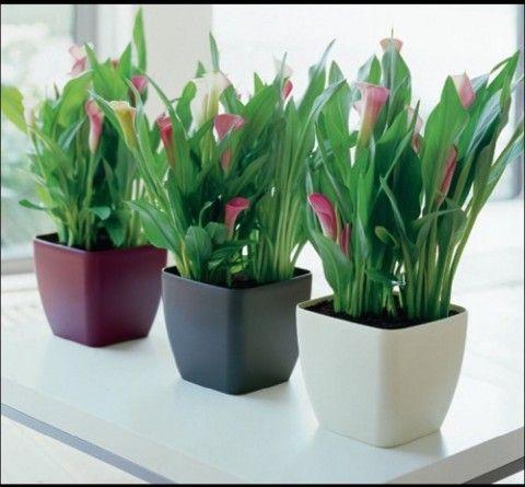 Plantas de interior para decorar la oficina | Terrazas con plantas ...